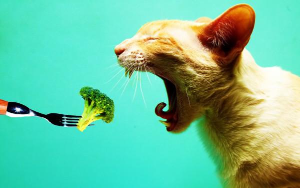 Vegetarian_Cat