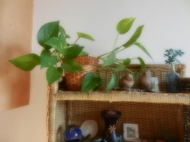 kitchen plant