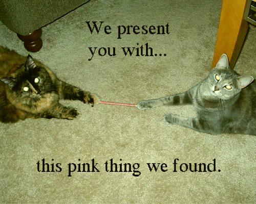 43c0cde23ed1f73854b67ed55db03133_17-best-images-about-maggie-on-pinterest-cat-shelves-funny-cat-mischievous-cat-meme_500-400