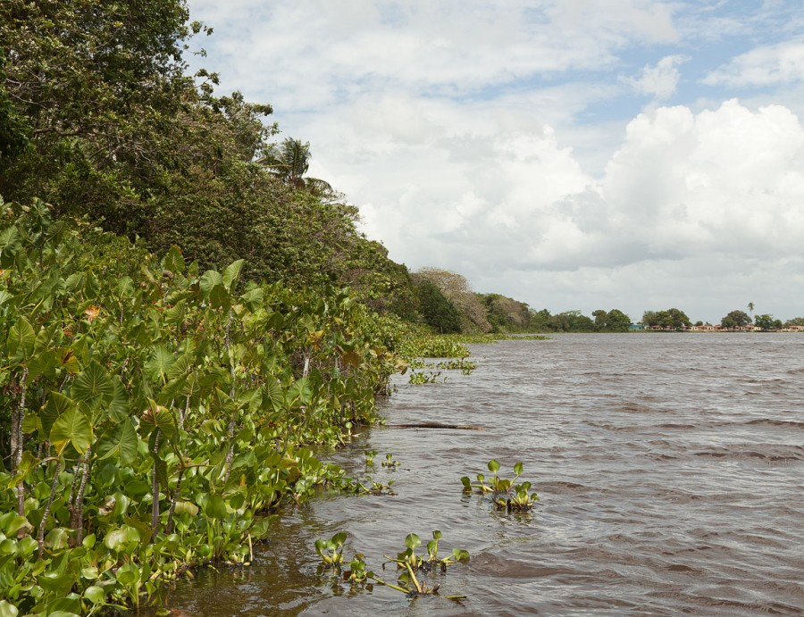 Ориноко, река такая. (Венесуэла)
