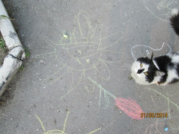 кот тоже помогал)