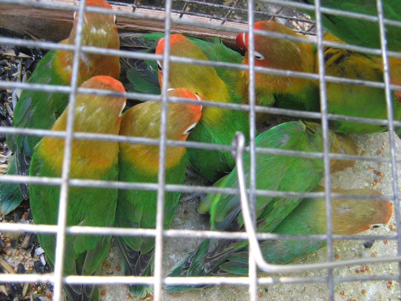 Зелёные-птицы