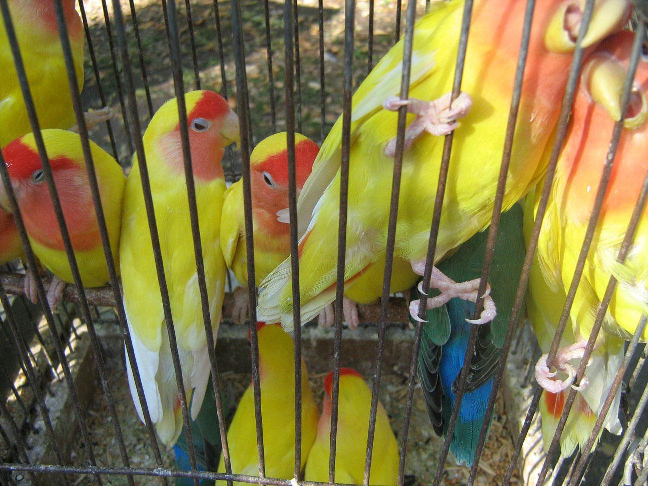 Жёлтые-птицы