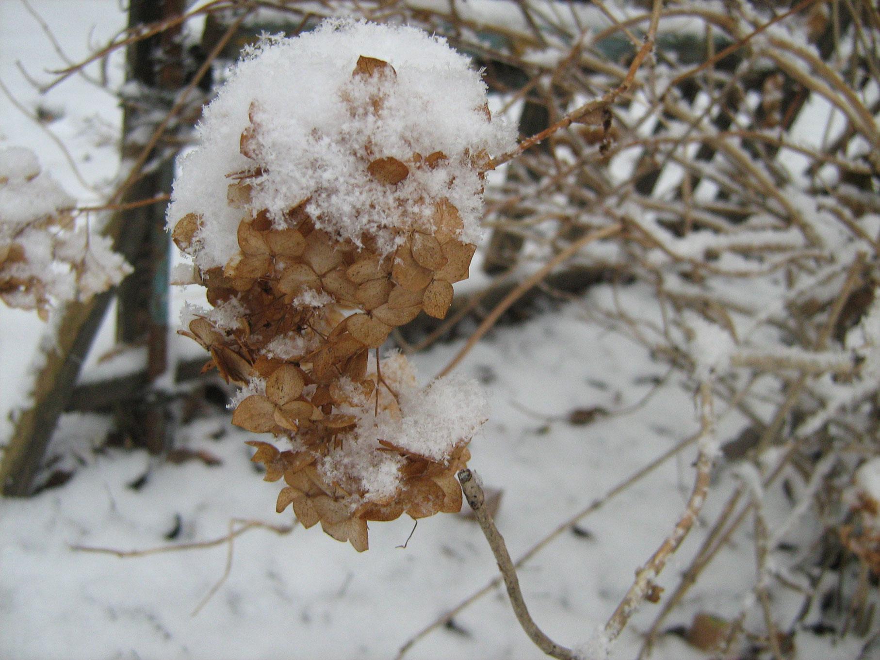 snowGortesia4