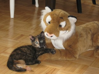 Kitteh and new friend.