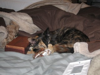 Multitasking kitteh discovers how to nap and play at the same time.