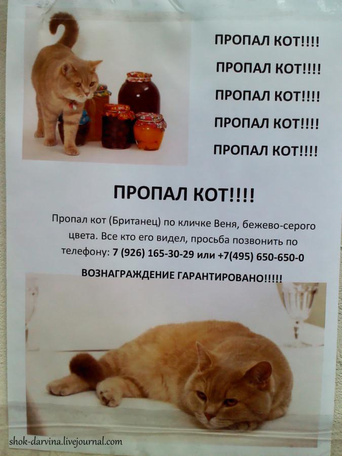 IMG_20120914_174035_0-001