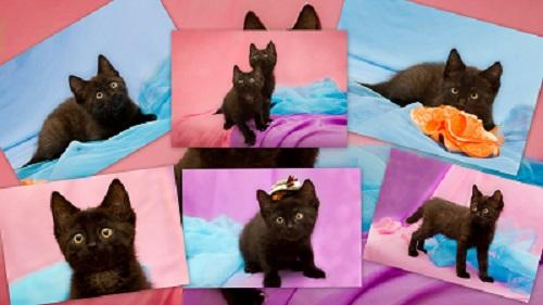 котята от трехлапой кошки4