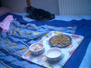 Rosie ignoring food
