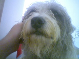 Maddie the Dog