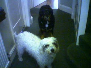 Maddie and Sasha together