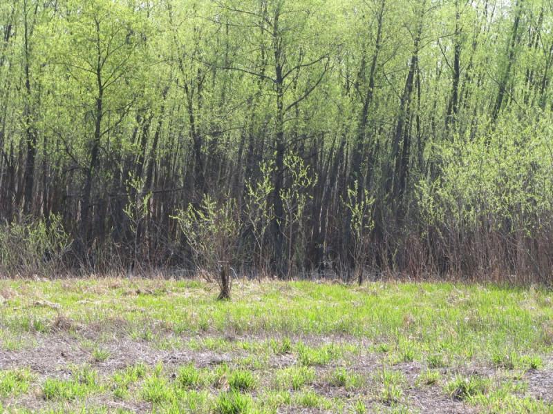 Louisville Swamp NWR