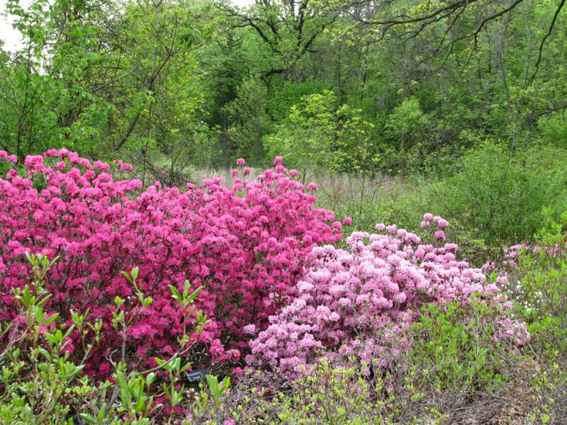 MN Arboretum