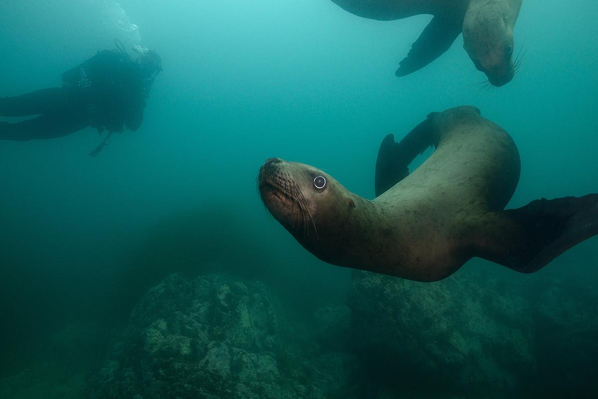 морской лев подводная лодка