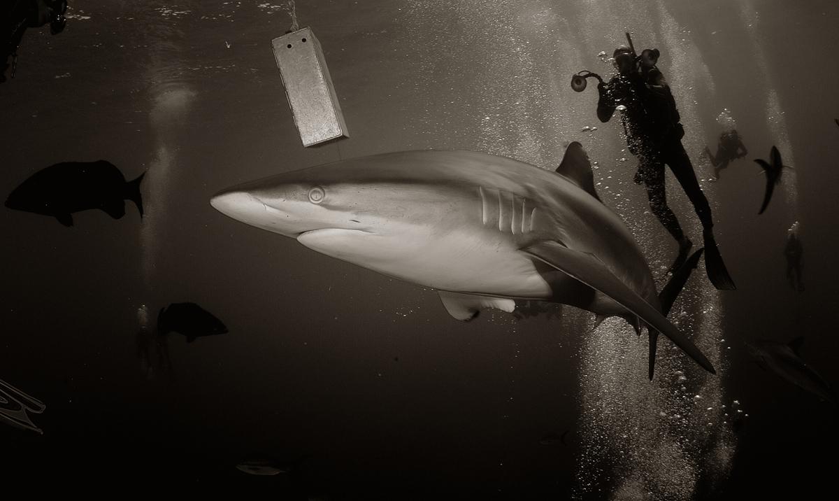я моряк с акулами знаком