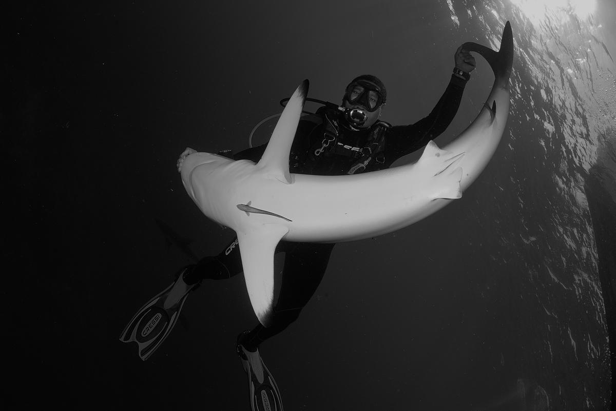 акула4
