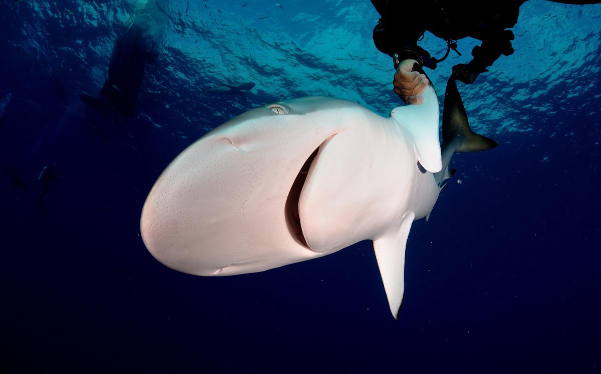 акула6