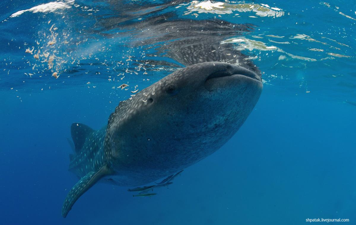китовая13
