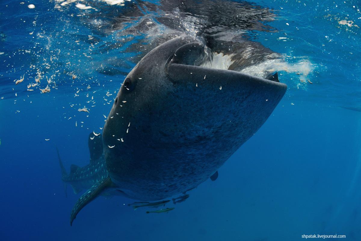 китовая14