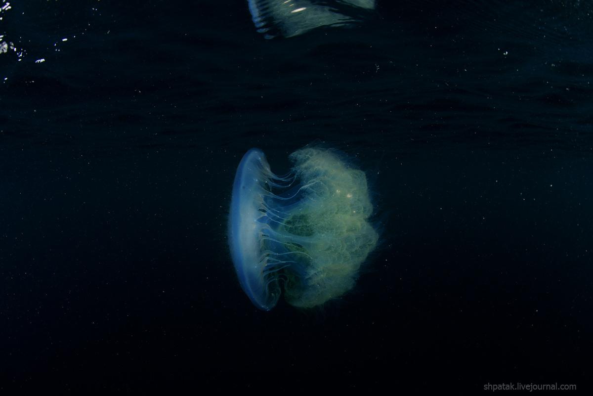 медуза7