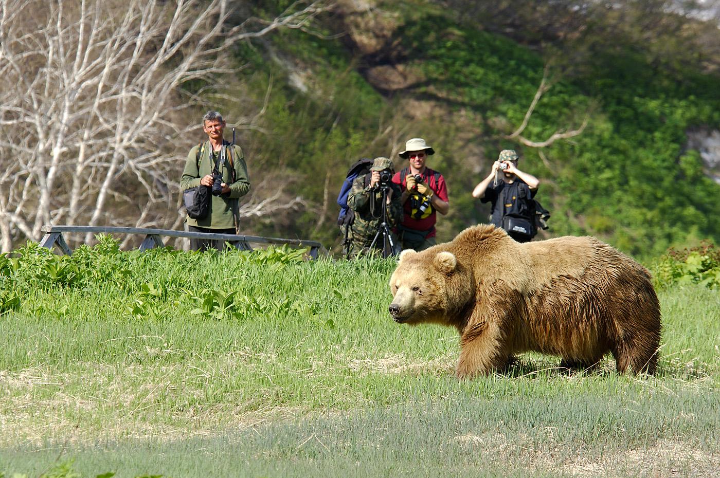 Когда медведь рядом