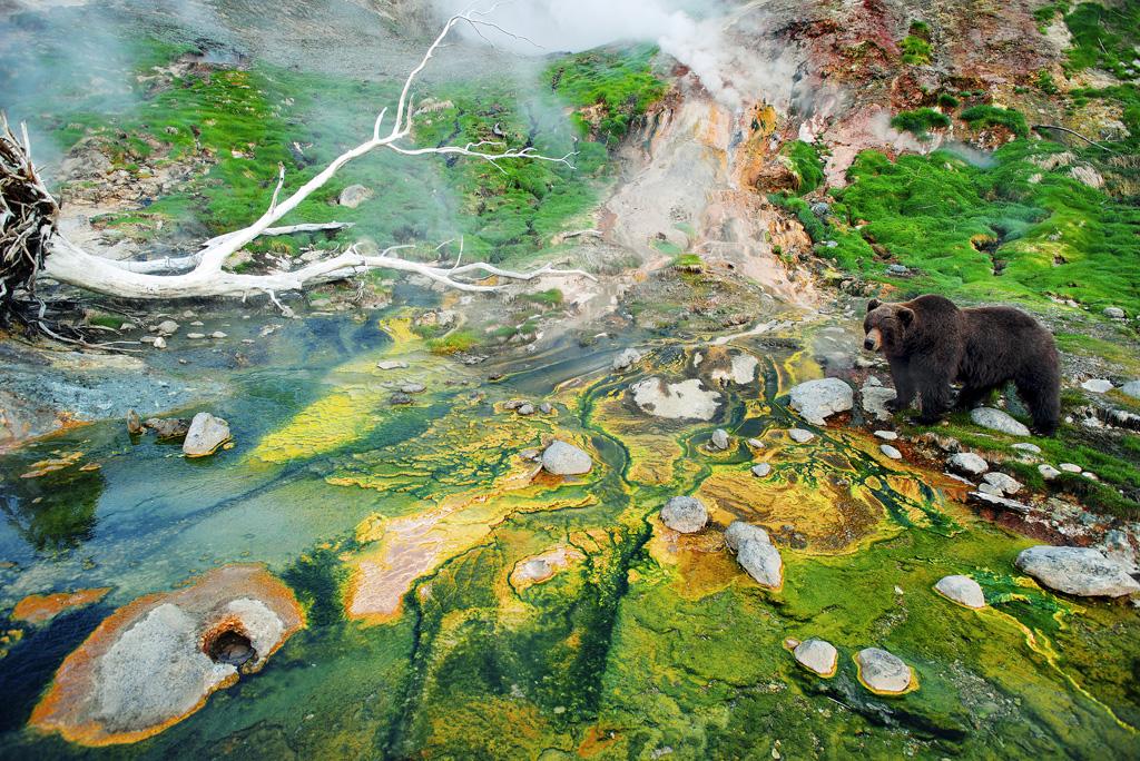 578 Медведь у водорослей-2