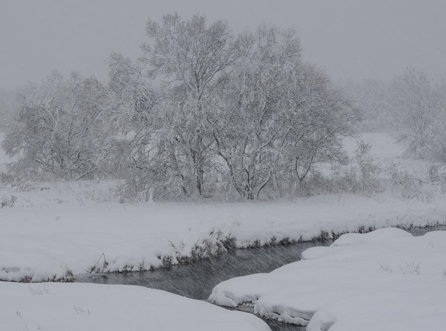 Краснодар на новый год погода