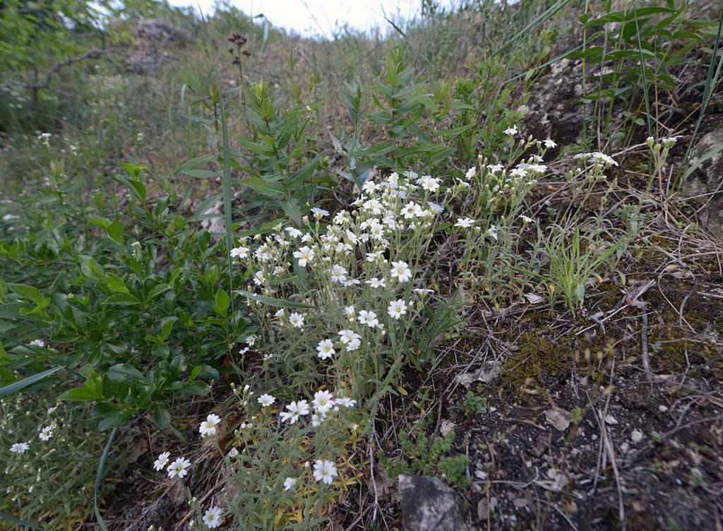 заповедник жигулевский сайт цветы и цветки