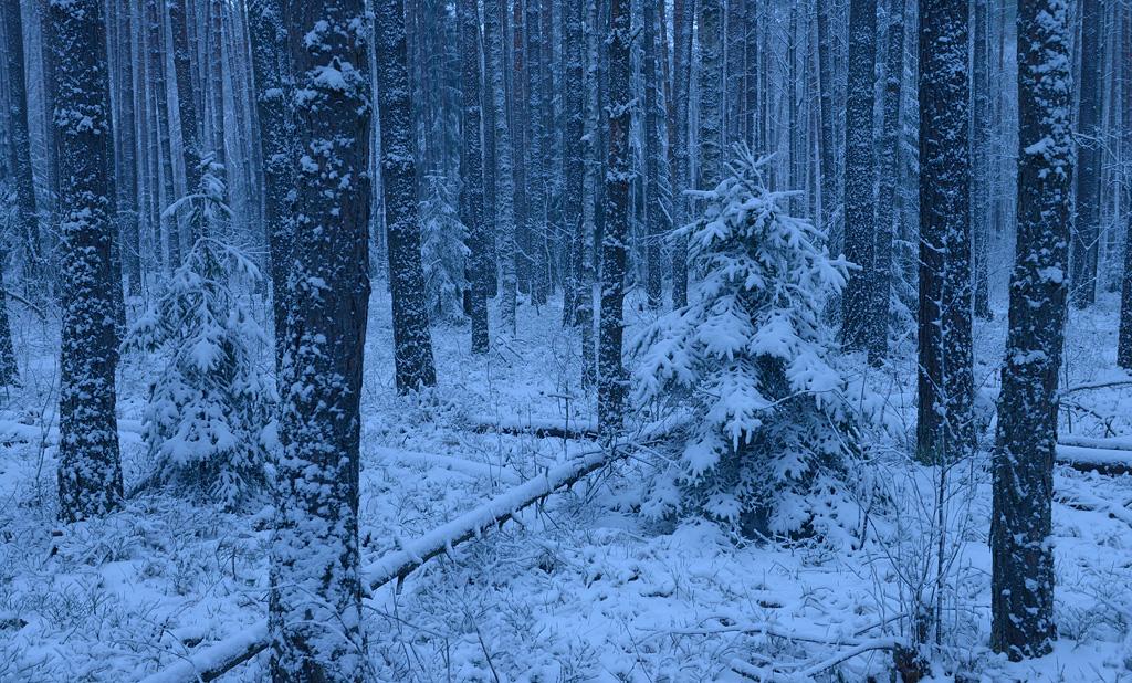 http://ic.pics.livejournal.com/shpilenok/17995238/681305/681305_original.jpg