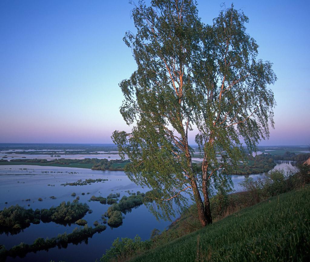 Доброе утро из Брянского леса! BL_L_W_025
