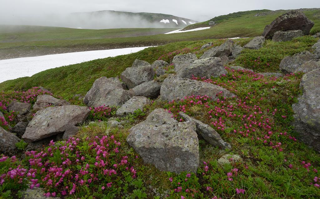 http://ic.pics.livejournal.com/shpilenok/17995238/700047/700047_original.jpg