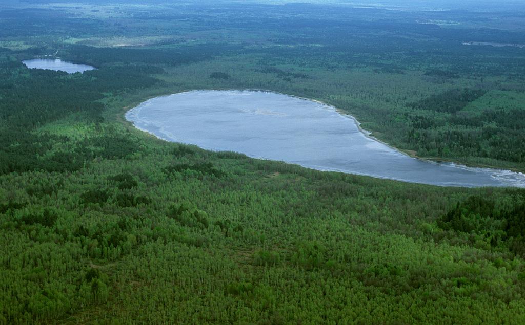 Брянский лес с воздуха