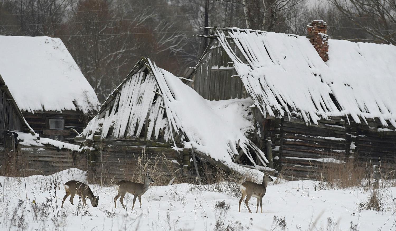 Картинки брянский лес зимой