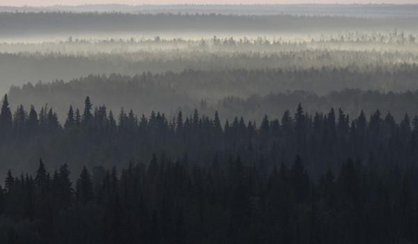 Мой новый фотопроект о старовозрастных лесах России