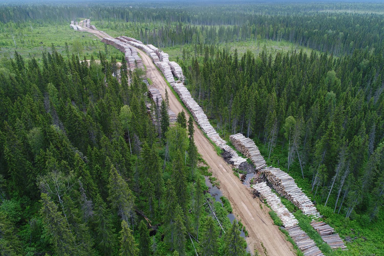 Двинско-Пинежское междуречье: как исчезают первозданные леса