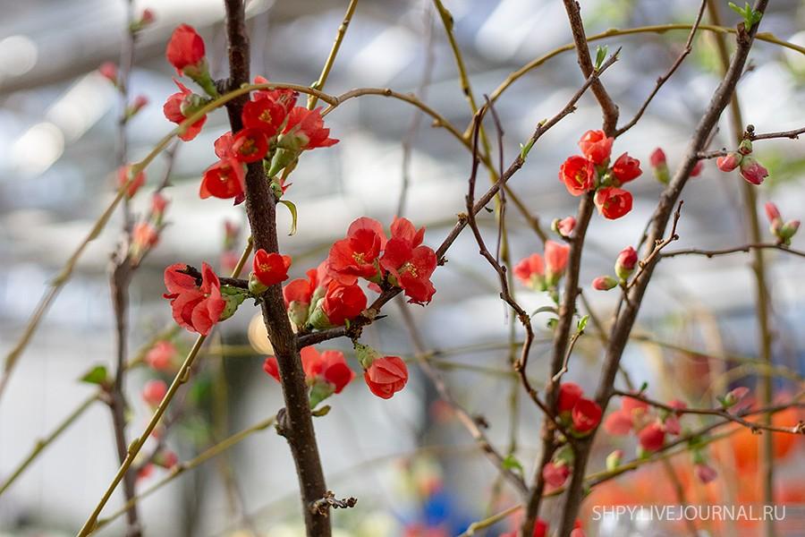 Выставка цветов Репетиция весны 2020 в Аптекарском огороде