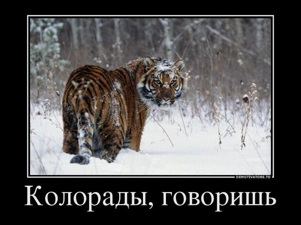 http://ic.pics.livejournal.com/shurikk77/33536538/11260/11260_original.jpg