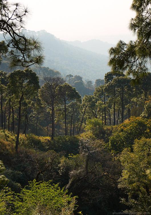 India-Dharamsala-03-27122013-sm