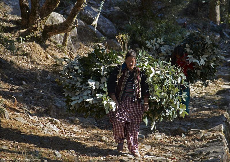 India-Dharamsala-13-29122013-sm