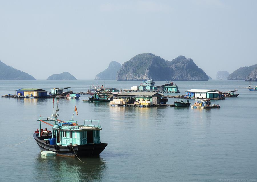Vietnam-CatBa-14-31122014-sm