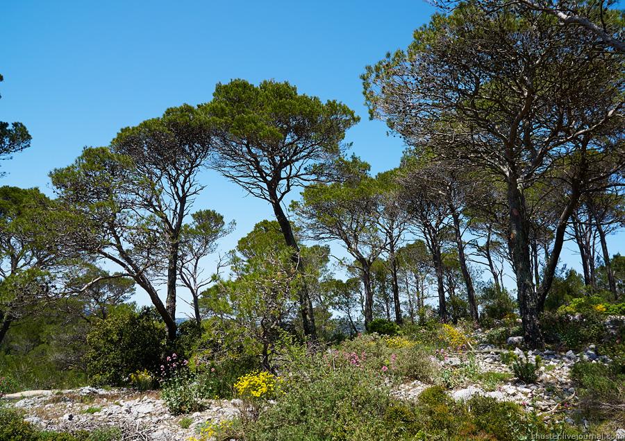 Toulon-23-090515-sm