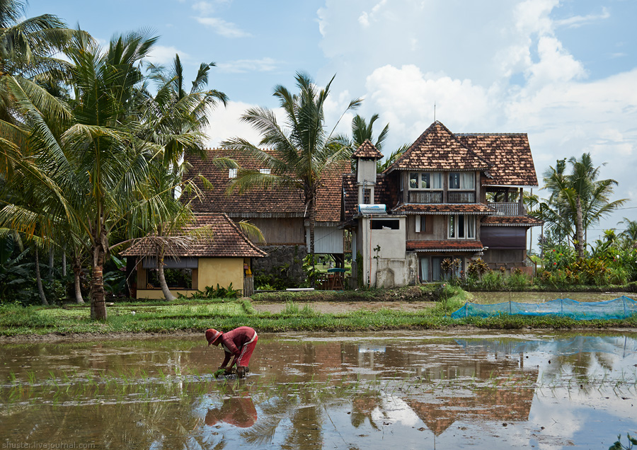 Bali-2016-Ubud-10-sm