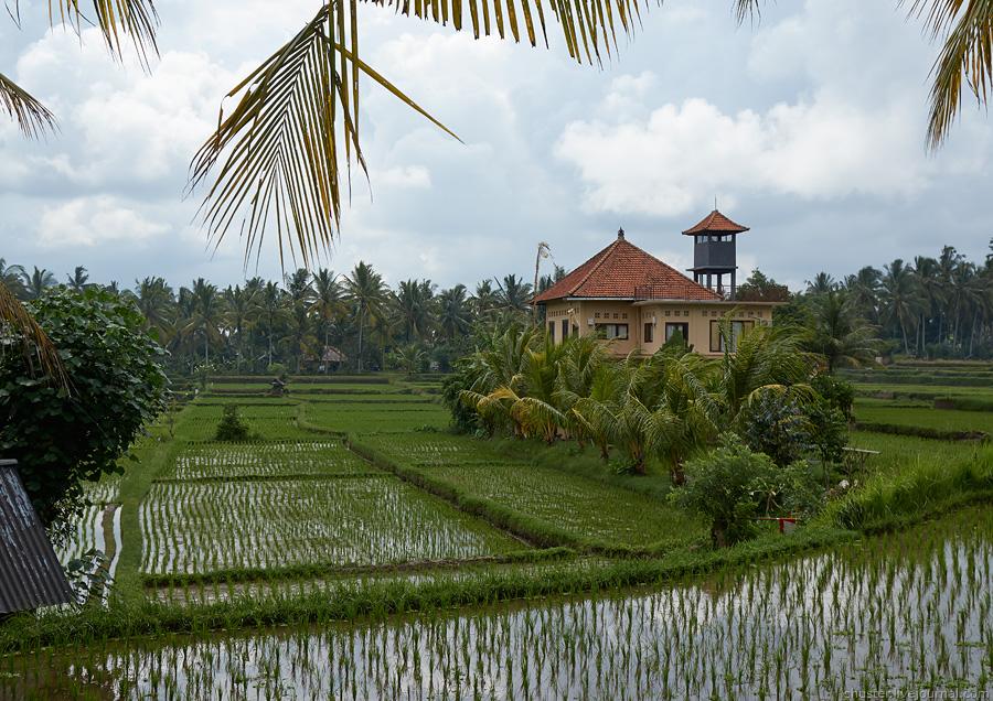 Bali-2016-Ubud-11-sm