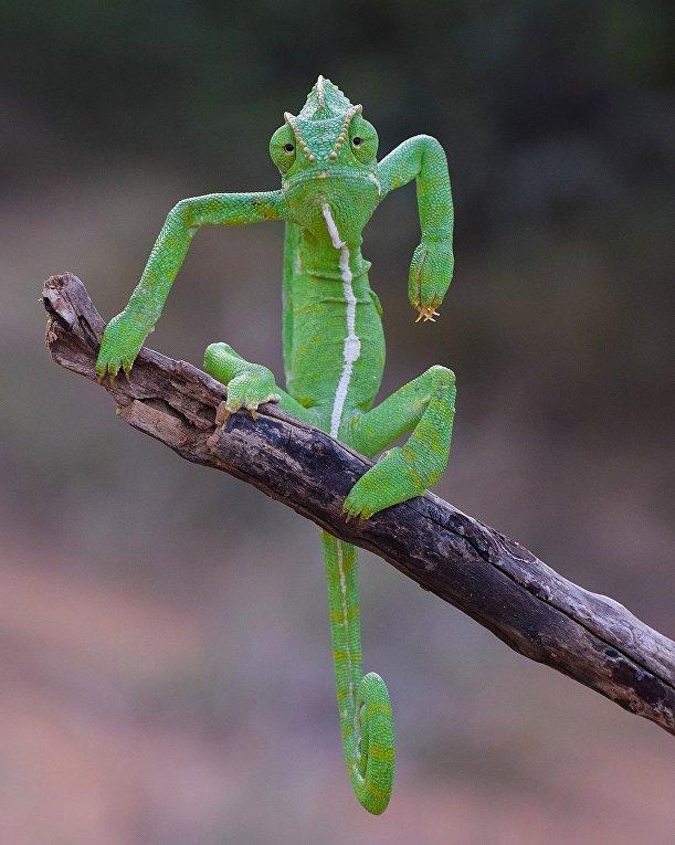 «Зеленый стилист» Западные Гаты, Индия.