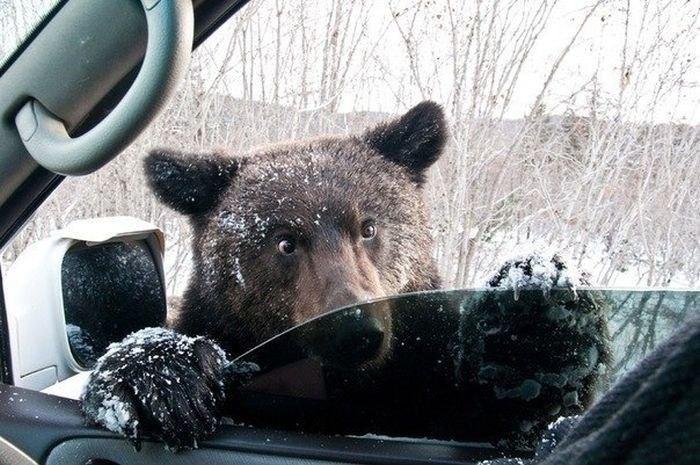 Hitchhiking in Siberia