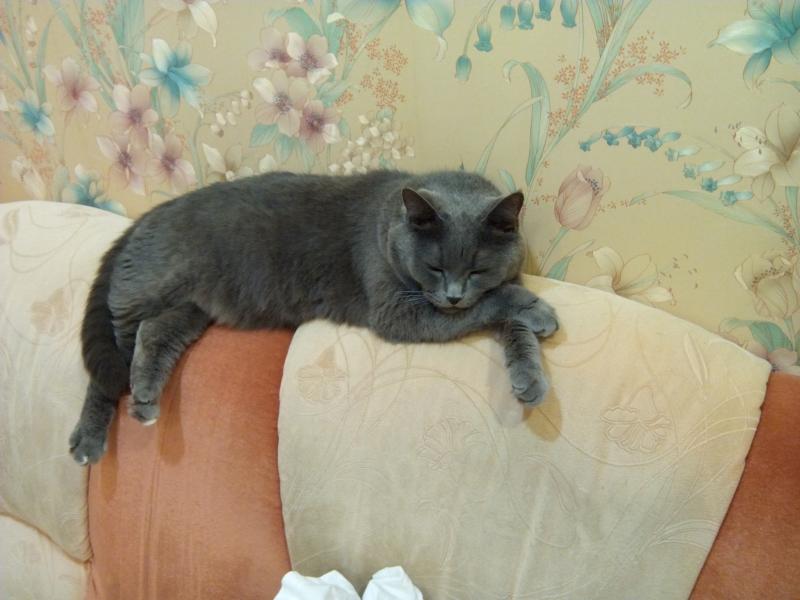 cat_sleeps