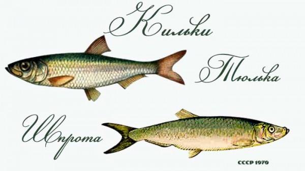 Аквариумная рыбка  5 букв сканворд
