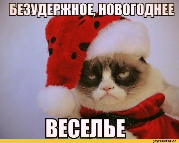 Grumpy-Cat-%D0%BD%D0%BE%D0%B2%D1%8B%D0%B9-%D0%B3%D0%BE%D0%B4-%D0%B2%D0%B5%D1%81%D0%B5%D0%BB%D1%8C%D0%B5-517062