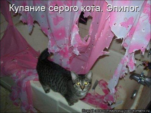 1357839065_novye-kotomatricy-2