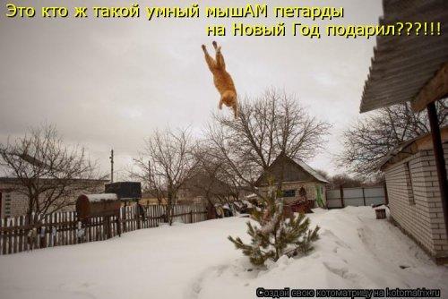 1357839014_novye-kotomatricy-6